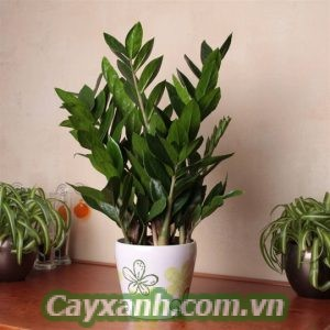 cay-sau-2-300x300 Big Sale