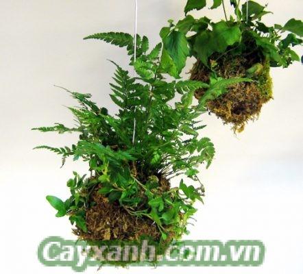cay-ban-cong-1-1-533x400 6 bước trồng cây ban công theo phong cách Nhật