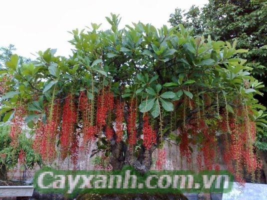 cay-bong-mat-1-534x400 Trọn bộ kỹ thuật trồng cây bóng mát đơn giản