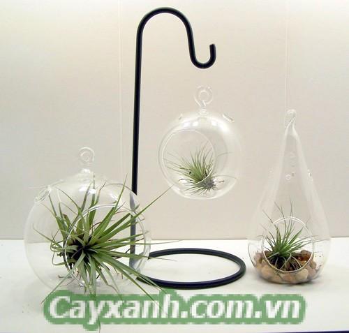 cay-canh-de-ban-1-518x400 Danh sách cây cảnh để bàn dễ thương dễ trồng