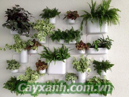 cay-canh-noi-that-1-2-533x400 Lưu ý khi thiết kế tường cây cảnh nội thất