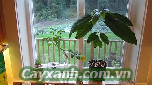 cay-canh-noi-that-1 Cách chọn cây cảnh nội thất hợp phong thủy
