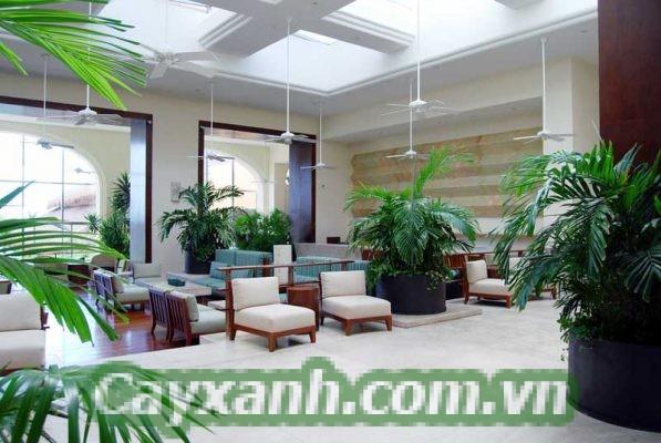 cay-canh-phong-thuy-2-597x400 Cây cảnh phong thủy lý tưởng cho khách sạn