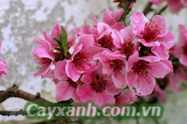 cay-canh-tet-4 Ý nghĩa cây cảnh tết có thể bạn chưa biết?