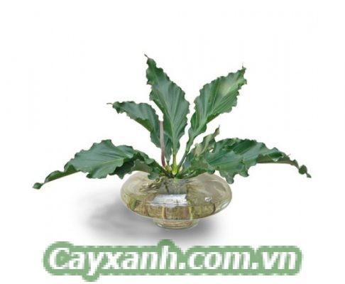 cay-canh-thuy-canh-1 Hướng dẫn chăm sóc cây cảnh thủy canh