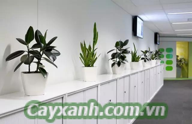 cay-canh-van-phong-1