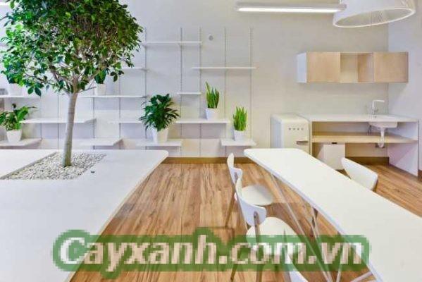 cay-canh-van-phong-1-536x400 Địa chỉ bán cây cảnh văn phòng uy tín tại Hà Nội
