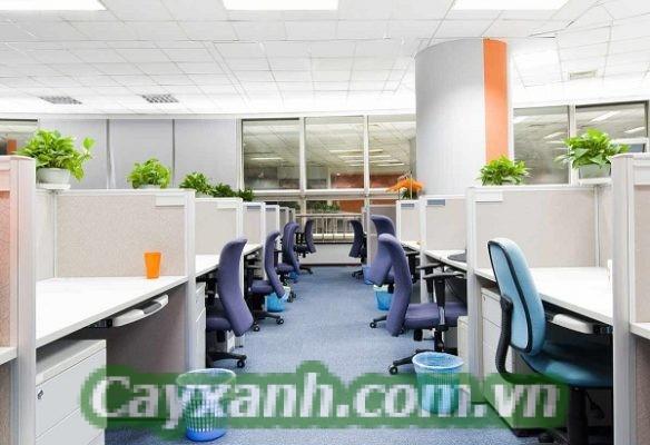 cay-canh-van-phong-1-1-617x400 Công ty cho thuê cây cảnh văn phòng uy tín Hà Nội