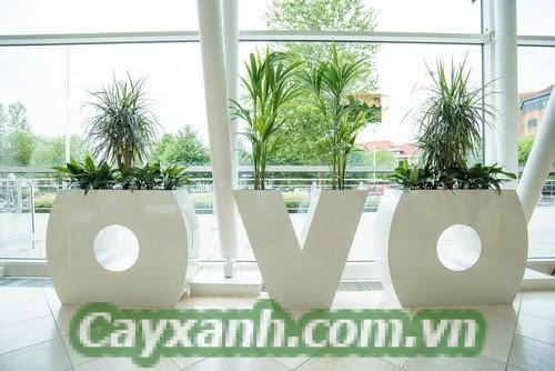 cay-canh-van-phong-4