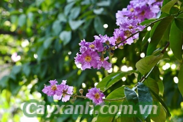 cay-cong-trinh-1-533x400 Top cây công trình có hoa đẹp mắt