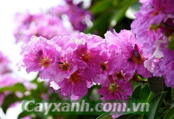 cay-cong-trinh-4