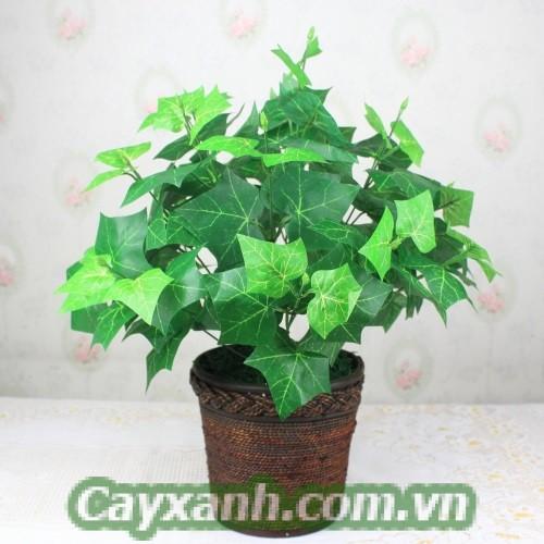 cay-trong-nha-1-1 Những loại cây trong nhà Chuyên gia khuyên trồng