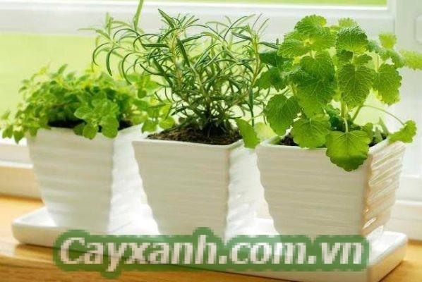 cay-trong-nha-1-600x400 4 lưu ý giúp chăm sóc cây trong nhà hiệu quả