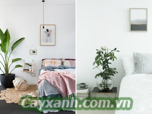 canh-canh-noi-that-1 Có nên trồng cây xanh nội thất trong phòng ngủ?