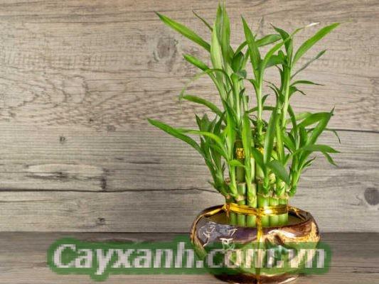 cay-xanh-phong-thuy-1-1-533x400 Kiến thức chọn mua cây xanh phong thuỷ