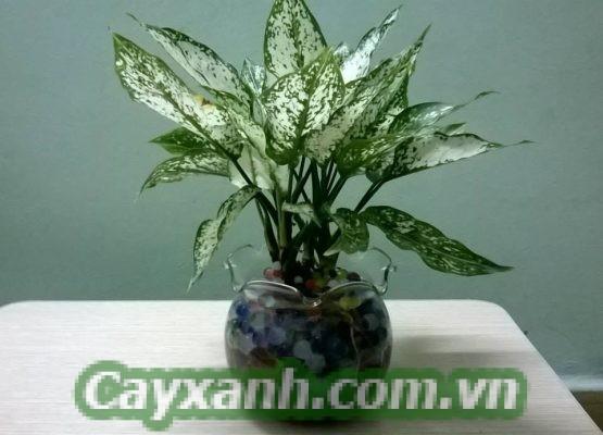 hoa-de-ban-1-1-555x400 Địa chỉ bán hoa để bàn đẹp tại Hà Nội