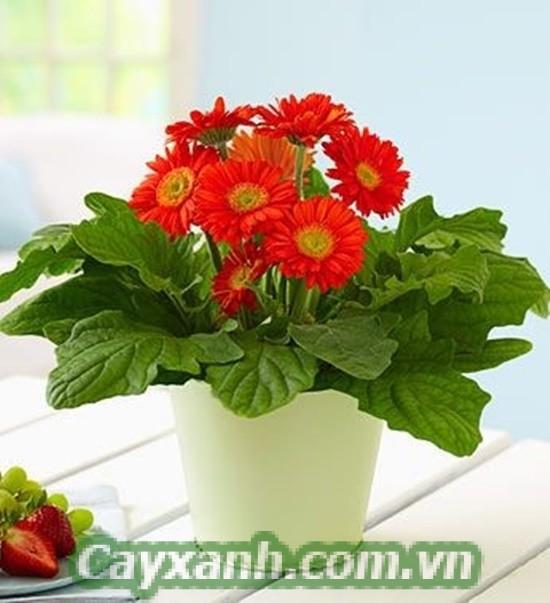 hoa-de-ban-1 3 loại hoa để bàn được yêu thích nhất 2017