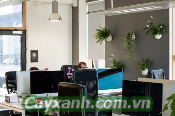 cay-canh-van-phong-1-617x400 Trang trí cây cảnh văn phòng đúng phong thủy