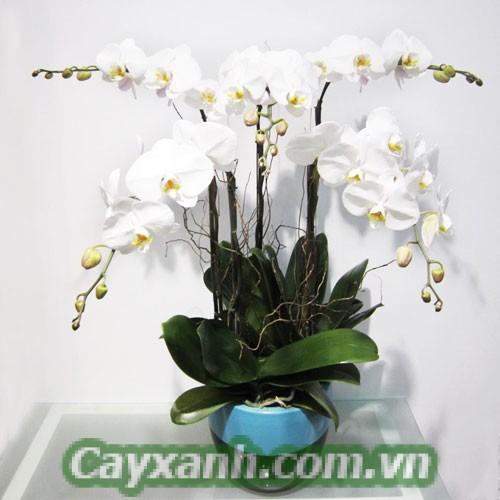 hoa-de-ban-1 Hoa để bàn làm quà tặng ý nghĩa cho bàn bè