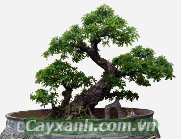 cay-canh-noi-that-1-485x400 Lưu ý khi tạo dáng cho cây cảnh nội thất