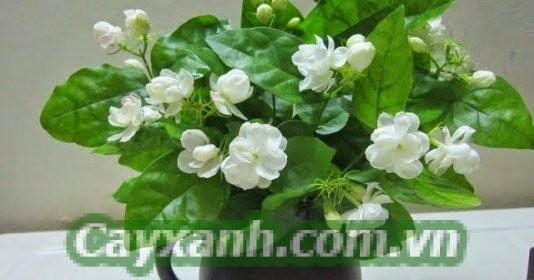hoa-de-ban-1-593x400 Hoa để bàn trong phòng ngủ mang cảm giác dễ chịu