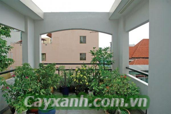 thiet-ke-tieu-canh-dep-4-540x400 Thiết kế tiểu cảnh đẹp cho nhà phố