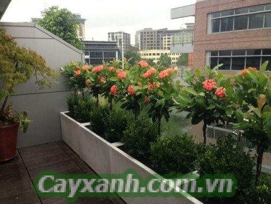 cay-ban-cong-1-2-533x400 Chăm sóc cây ban công chưa bao giờ là dễ dàng