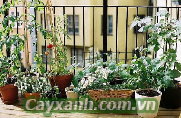 cay-ban-cong-1-530x400 Lưu ý khi trồng cây ban công hữu ích cho mọi người