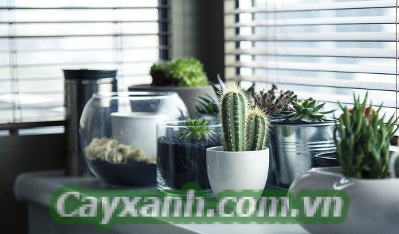 cay-canh-de-ban-2-2 Sáng tạo với những chậu cây cảnh để bàn mini