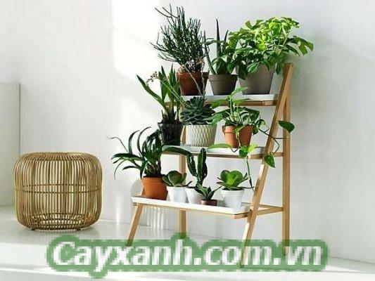 cay-canh-noi-that-1-2 Bí quyết đặt để cây cảnh nội thất cho không gian hẹp