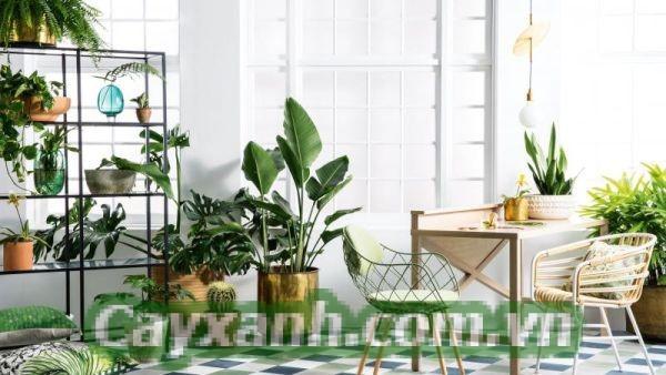cay-canh-noi-that-1-6 Làm sao để cây cảnh nội thất tươi xanh trong mùa hè?