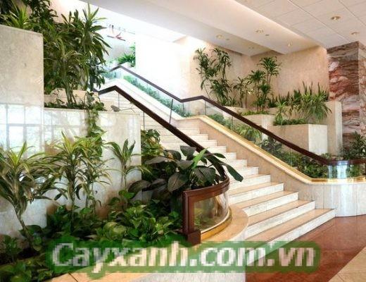 cay-canh-noi-that-1 Shop cây cảnh nội thất được yêu thích nhất Hà Nội