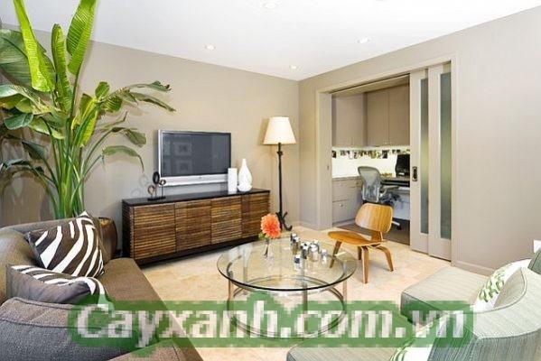cay-canh-noi-that-1-5-582x400 Hướng dẫn chăm sóc cây cảnh nội thất trong mùa đông