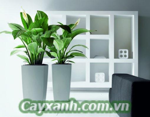 cay-canh-van-phong-1-1-509x400 Kinh nghiệm chăm sóc cây cảnh văn phòng luôn xanh tươi