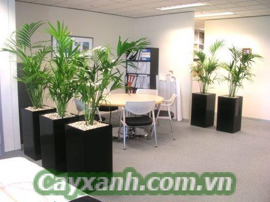 cay-canh-van-phong-1 Mua cây cảnh văn phòng ở đâu đẹp tại Hà Nội?