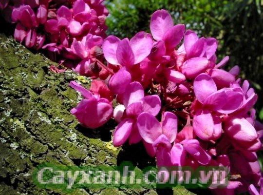 cay-hanh-phuc-1 Hướng dẫn chăm sóc cây hạnh phúc từ A - Z