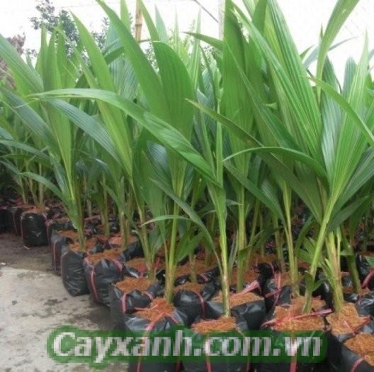 cay-phong-thuy-1 Cây phong thủy trồng trước nhà được yêu thích
