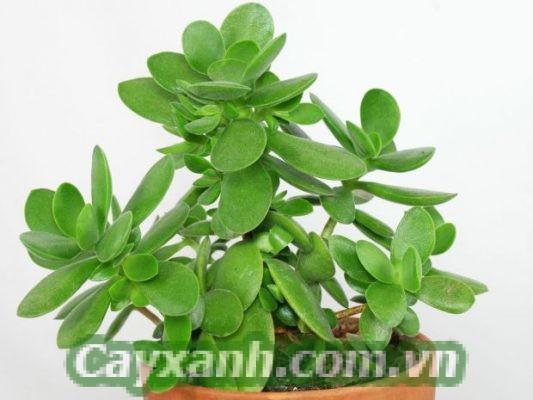 cay-phong-thuy-1-3-554x400 Gợi ý cây phong thủy hợp tuổi Mùi phát tài phát lộc