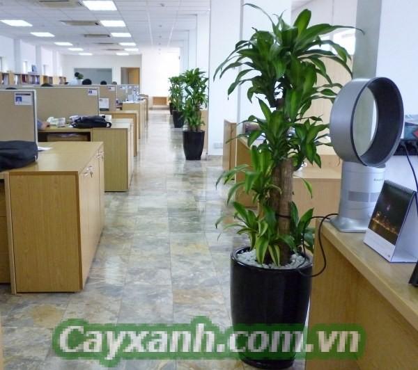 cay-thiet-moc-lan-3