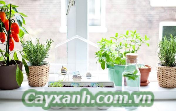 cay-trong-nha-1-3 Bí quyết chăm sóc cây trong nhà không sâu bệnh