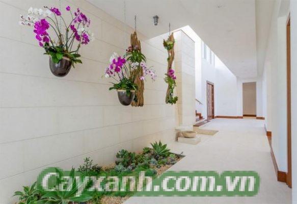 cay-trong-nha-1-2-600x400 Tổng hợp những mẫu vườn cây trong nhà đẹp mắt