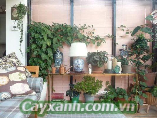 cay-trong-nha-1-4-600x400 3 nguyên tắc chăm sóc cây trong nhà quan trọng nhất