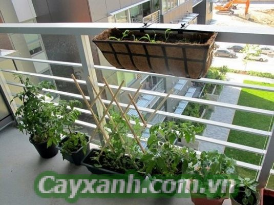 cay-trong-nha-1-1 Nguyên tắc vàng trong thiết kế vườn cây trong nhà phố