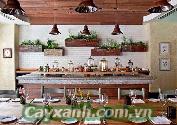 cay-trong-phong-1-2 Bí quyết trồng cây trong nhà bếp vừa khéo vừa xinh