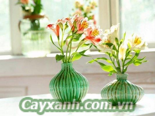 hoa-canh-tet-1-533x400 Những cây cảnh tết hút tài lộc mà bạn đang tìm kiếm