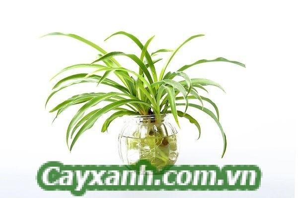 hoa-de-ban-1-1-600x400 Hướng dẫn chăm sóc hoa để bàn trồng trong nước