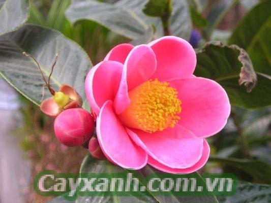 hoa-de-ban-1-2-533x400 Đón năm mới rực rỡ với 4 chậu hoa để bàn tươi bất tận