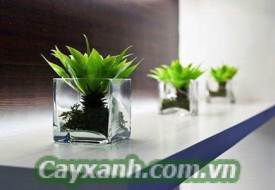 hoa-de-ban-1 Cẩm nang chăm sóc hoa để bàn trồng bằng đất