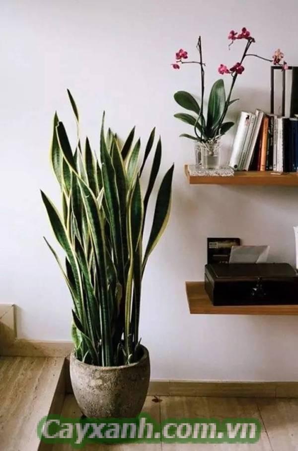 cay-canh-noi-that-1-3 4 nguyên tắc sắp đặt cây cảnh nội thất hiện đại
