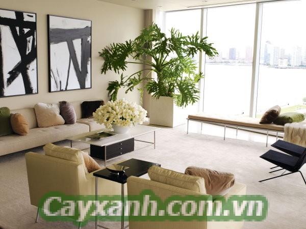 cay-phong-thuy-1-4-574x400 Vị trí trồng cây cảnh phong thuỷ đón tài lộc